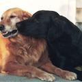 愛犬とのキスで死ぬ!? 危険なペット感染症に注意