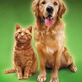 震度5以上の地震に反応する「犬と猫」の異常行動とは? 2月か3月にくる地震に備えよう