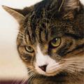 ネコに嫌われがちなヒトが実践したい「ネコ愛されテク」