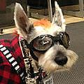ひとりでTSUTAYAにDVDを返却する、都市伝説犬・こてつ君の日常とは?