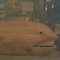 6月14日までに大地震!? 静岡に出現した深海ザメは、大地震の前兆だった!!【前例多数】