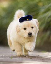 かわいいだけの犬映画はもう飽きた!? わずらわしくて、迷惑で......でもやっぱり愛しい我が飼い犬!