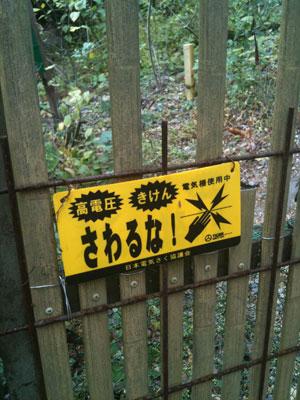 matsuotaisha2-8.jpg