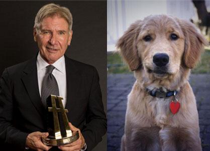 HarrisonFord-dog.jpg